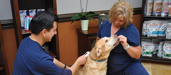 Pet Microchipping in Cotswold