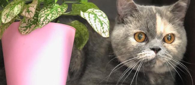 Cat Senior care in Cotswold
